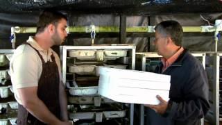 Escuela de campo: Formación de alevinos de trucha - 2 de septiembre