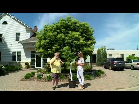 Grow With KARE: 3 Great Ornamental Trees
