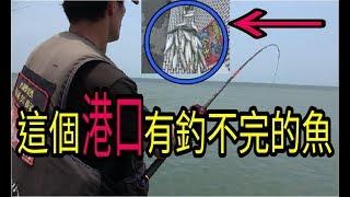 要釣很多魚就是那麼簡單!!一群魚就在這個港口??!!?!