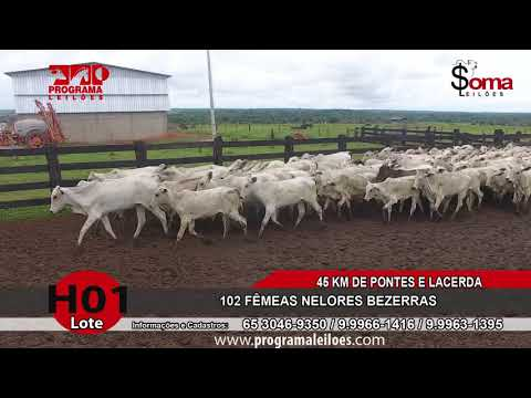 LOTE H01