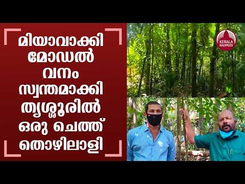 Miyawaki model afforestation by trade union worker Vijeesh Ethayi is now viral | Thrissur