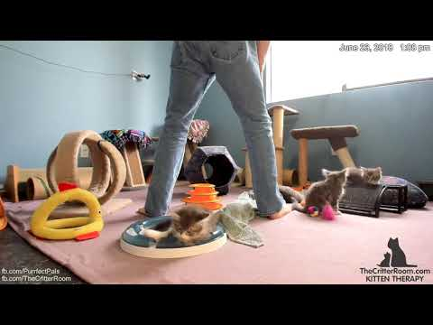 Guardian Kittens - Morning 2018-06-23