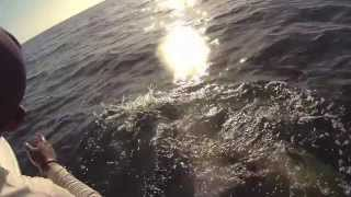 Grouper Fishing Tampa Bay, Skyway heavy hitters