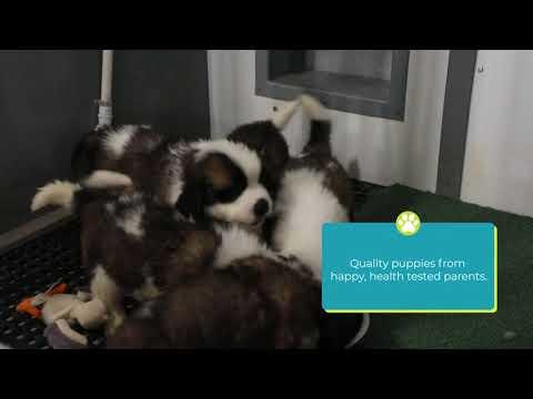 The Puppy Store Utah Breeders