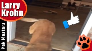 Going backwards on two front legs  🐶 Super cool dog training tricks for any dog