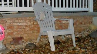 Adirondack Chair Says HI