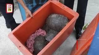 Kelantan marine police foil smuggling of 90 palm civets, 14 tortoises
