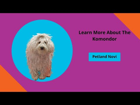Learn About Komondor Puppies