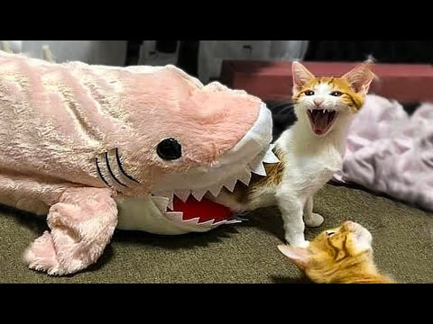 best of the best funny animals