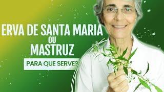 Conheça Todos Os Benefícios da Planta Mastruz Ou Erva Santa Maria e a Maneira de Utilizá-la