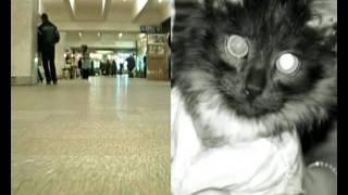 Димка, котенок с переломанным позвоночником.avi