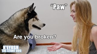 asking-for-my-dog-s-paw-too-many-times-he-moans-at-me