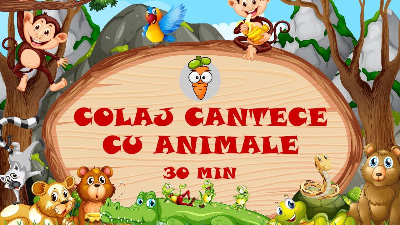 30 Minute Colaj Cantece cu Animale | Cantece pentru Copii | Desene Animate