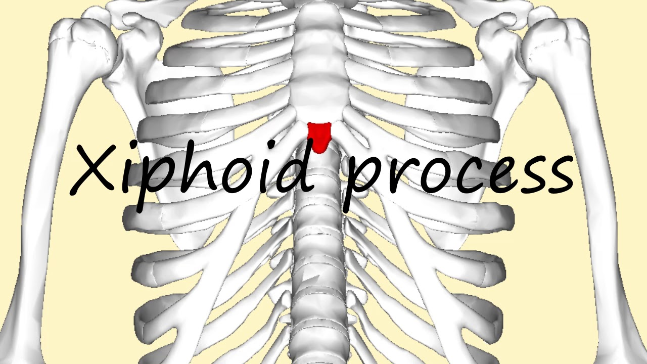 How To Pronounce Xiphoid Process Youtube
