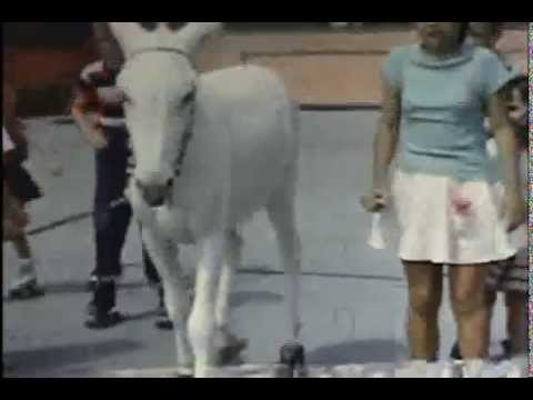pinky the roller skating donkey 1957-1959 (banning california)