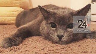 Вознаграждение за поимку кота в Нижнекамске увеличили до 20 тыс рублей