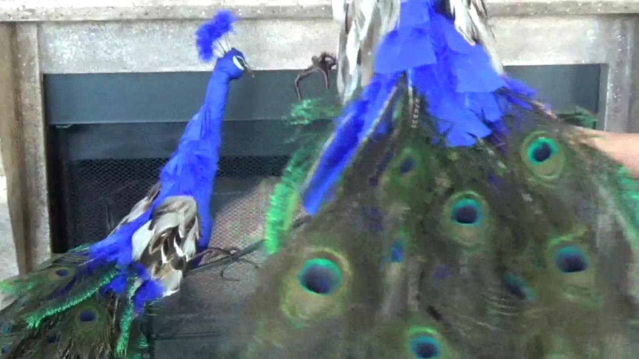 How to make a peacock