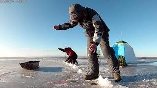 Зимняя рыбалка на корюшку с женой Финский залив Клев