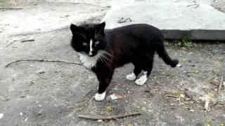 ✅ Кошка девон-рекс / От женихов нет отбоя