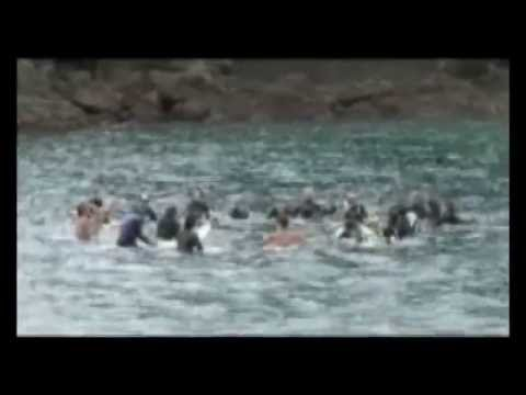 The horror of whale killing in taiji. And them, trying to save them.
