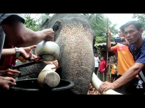 Ivory Cutting Ceremony (พิธีตัดงาช้างมลายู)