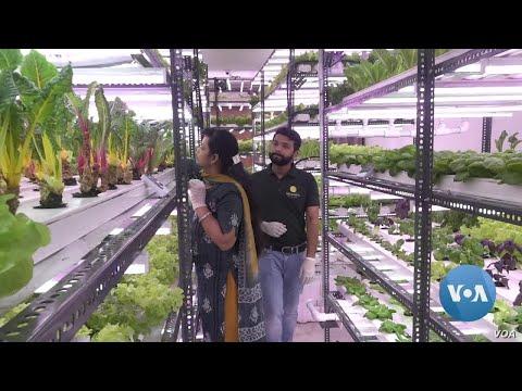 Hydroponic Farm Venture Flourishes in New Delhi Amid Pandemic