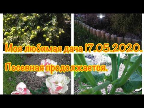 Моя любимая Дача 17.05.2020.Посевная продолжается .Сею цветы и