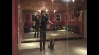 Lacie - Blue Collar K-9 Training Center - Winslow Maine - Basic Obedience Training
