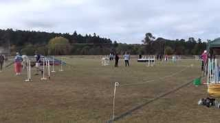 Obedience & Agility Dog Trials Armidale Nsw April 2015 Video