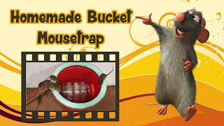 Bucket Mouse Trap In Action Catching Mice In House Most Humane Mouse Trap