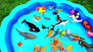 Learn Colors With Wild Zoo Animals Blue Water Shark Toys For Kids thumbnail