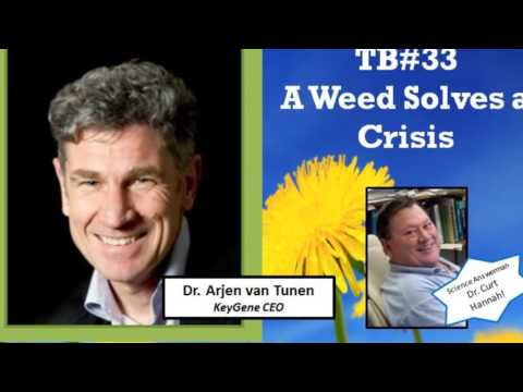 Talking Biotech 033 - Dandelion-- the New Rubber Industry
