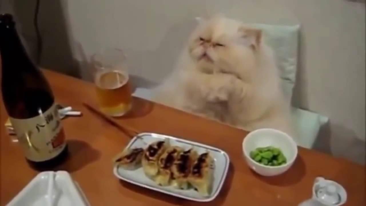 Migliori Video Di Gatti Piu Divertenti E Teneri Di Youtube Hd 15