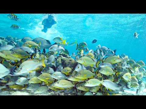 Hol Chan Marine Reserve | Top Coral Reef Scuba Diving | Belize, Caribbean