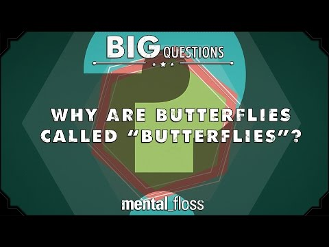 Why are butterflies called 'butterflies'? - Big Questions (Ep. 13)