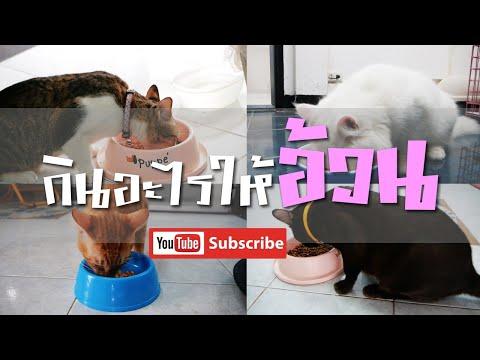 เคล็ดลับอาหารแมวของที่บ้าน   กินแบบนี้อ้วนทุกตัว   Mr.CatMan