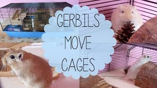 The Gerbils Have Moved Cages