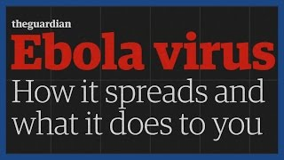 How does Ebola kill you? | Guardian Animations