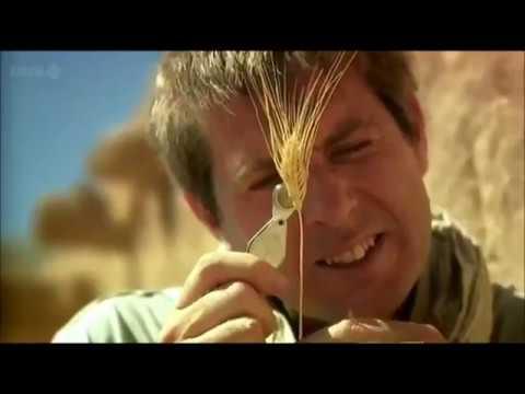 BBC Documentary : Göbekli Tepe