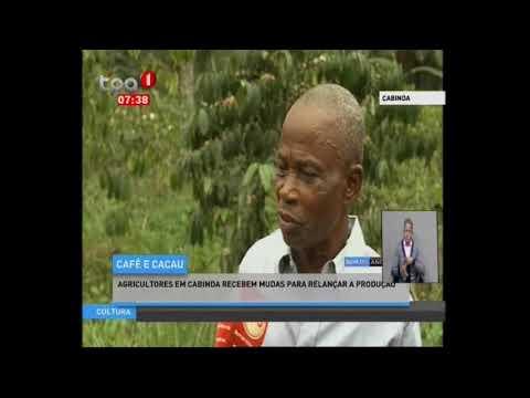 Cabinda Agricultores recebem mudas para relançar produção