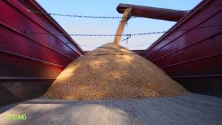 Cotton harvester and machines  How to harvest cotton  Harvesting with the help of farm machinery