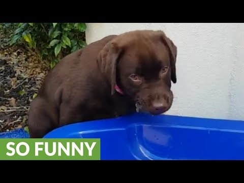 Silly puppy tries to eat leaves in pool