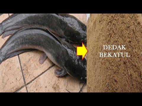Foto: Mengolah Ikan Tuna Seharga Rp 44 M