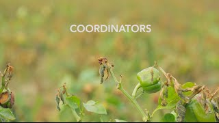 WealthWorks - Coordinators