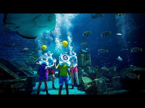 Atlantis Shark Safari Experience in Dubai