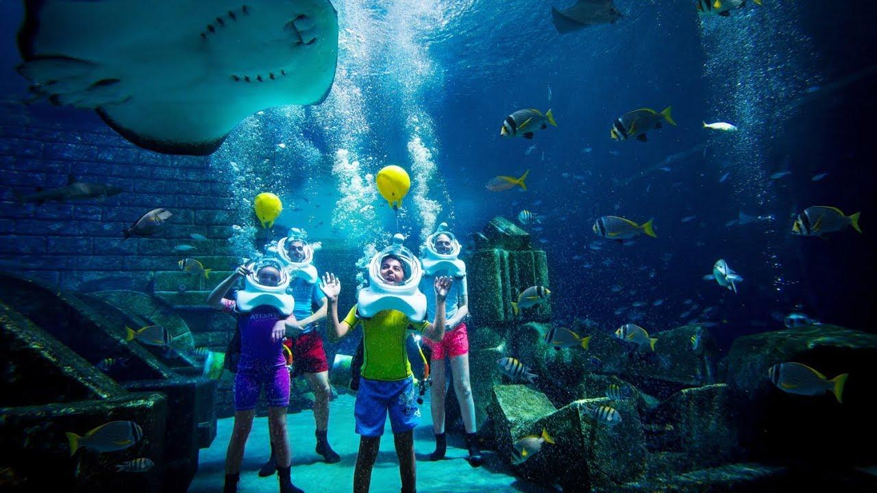 Atlantis Shark Safari Experience in Dubai - YouTube