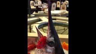 Рыбная витрина. Assaggiatore на Мичуринском(, 2011-07-07T07:21:50.000Z)