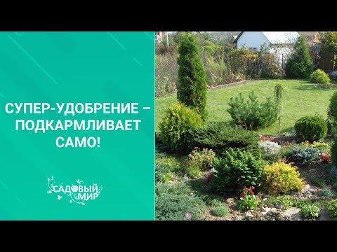 Вопрос: Какие растения выбрать для горшечного сада?