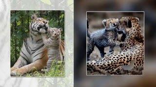 Животные и их детёныши.