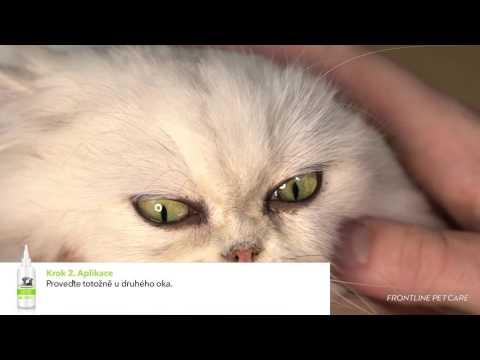FRONTLINE Pet Care CZ - Jak vyčistit oči vašeho mazlíčka?